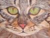 joyce_kilmartin_cat
